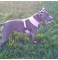 Lilac Harness  *discontinued*