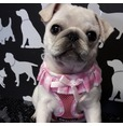 Pink Frilly Harness