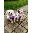 Purple Frilly Harness