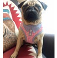 Pink Polo Plaid Harness  *discontinued*