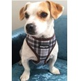 Brown/Grey Plaid Harness
