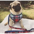 Navy/Red Plaid Harness