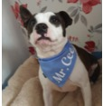 Personalised Sky Blue Bandana